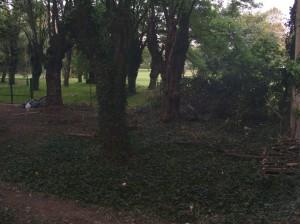 Manicomio Giardino invaso dall'edera Mezcal