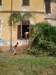 Manicomio rimozione infestanti Mezcal